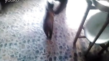 猫咪的事情