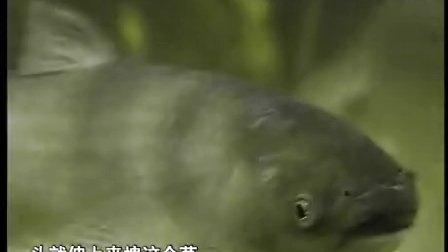 钓鱼教学视频 野钓全攻略2b
