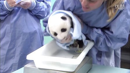 圣迭戈动物园熊猫宝宝体检合集(1-12)