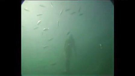人类首次拍到活体人鱼 -『旮旯讨论区独家』 大堡礁海底惊现人鱼