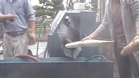 山药清洗机