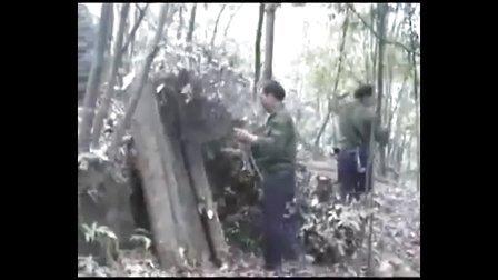 食用菌栽培技术(庆元香菇栽培技术)
