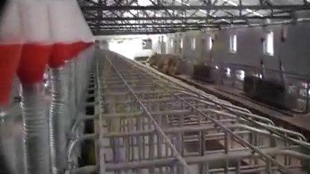 发酵床养猪舍的建设山西发酵床养猪技术视频
