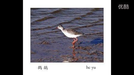 野生鸟类图片赏析