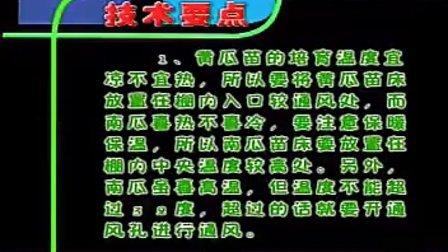 公益:海阳白黄瓜种植栽培技术 标清