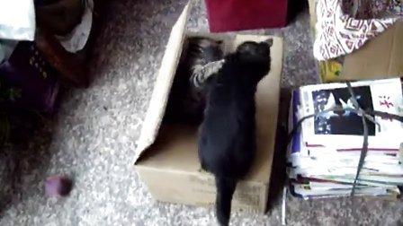 纸箱攻防战