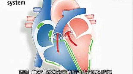 详细生动视解心脏功能与起搏器(中文字幕)