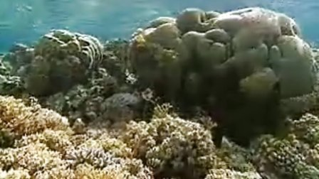 Project AWARE - Coral Reef Conservation