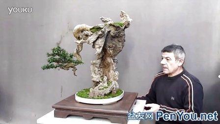 国外附石精品盆景(1)