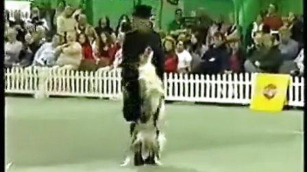 """""""人犬共舞""""片源来自YouTube,原视频名为Tina Humphrey"""