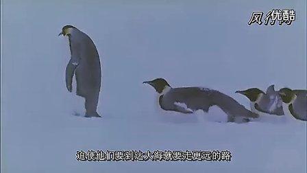 帝企鹅日记(生态记录片)
