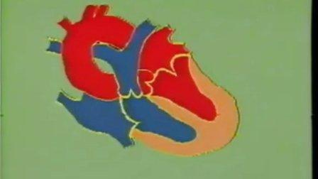 心脏和血液循环系统检查--06