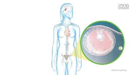 女性生理周期及性水平