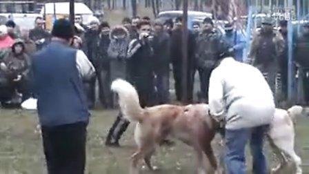 桑卡拉VS猎狼犬 第一回