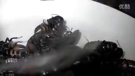 日本人吃蟑螂.m4v_(360p)