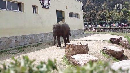 无锡动物园小象希希