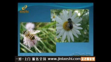 小学一年级美术名师精讲勤劳的蜜蜂和蚂蚁张殿影金老师家教