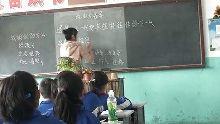 大城县魏梦英 2010010254小学五年級科學相似与差异相似