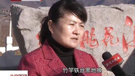 基层干部风采录:闫凤娇——心系果农  为民谋利[北京新闻]