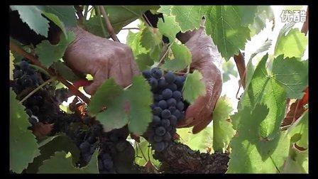 西班牙MARQUÉS DE CACERES 马奎斯·卡西洛酒庄
