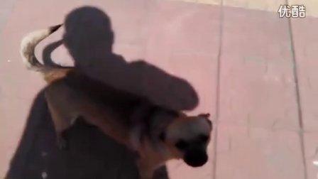 正殿……天下的视频 2013-04-25 14:20