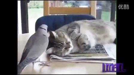 搞笑动物视频合集,笑掉大牙!