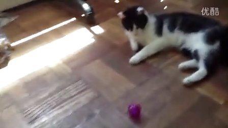 蠢猫partIi-blueusher