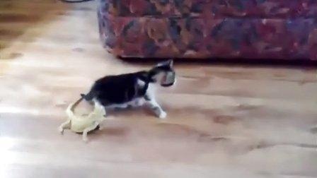 猫星人VS蜥蝪