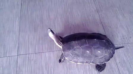 13年浴佛节(佛祖圣诞)结缘放生灵龟