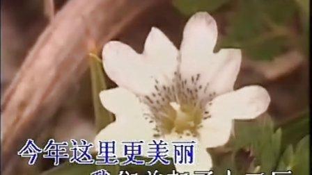 小燕子——王丹凤