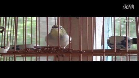 (绣眼鸟的叫声)【绣眼鸟大唱无数多口】( 高清)