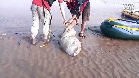 5月15黄河漂流时拖出一具尸体