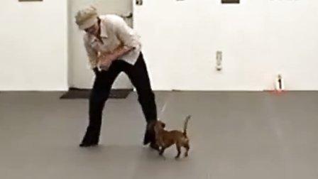 人狗共舞 Canine Freestyle