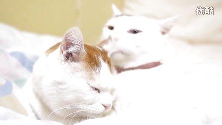 猫叔和Mimi互相舔毛