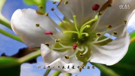 最炫民族风(动物狂欢版) -- 凤凰传奇