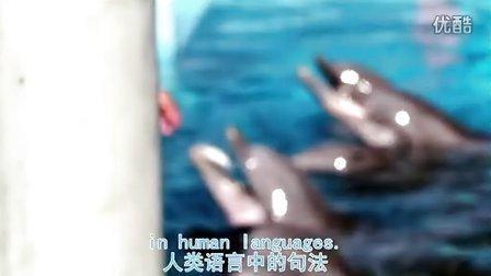 科学研究证明 海豚有语言