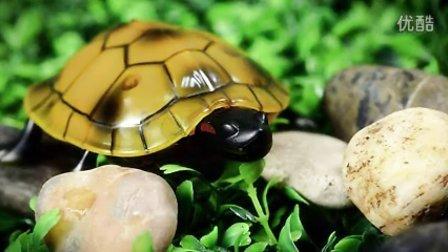 创新概念遥控玩具系列-遥控超可爱小乌龟!