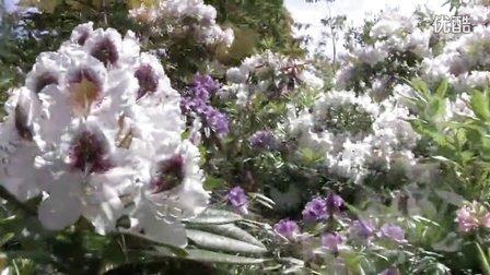 VanDusen Botanical Garden  The Rhododendron Walk