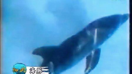 海豚-法国版十万个为什么