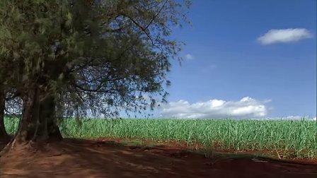 风光片-夏威夷