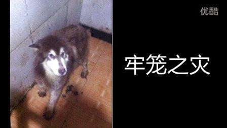【杭州611特大虐狗杀狗事件】