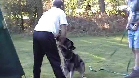 迪尔克. 鲁尼两位教小犬holding bark