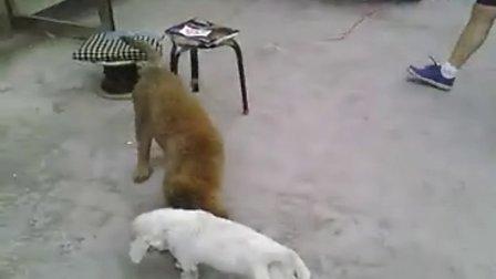 绳子 女人和狗