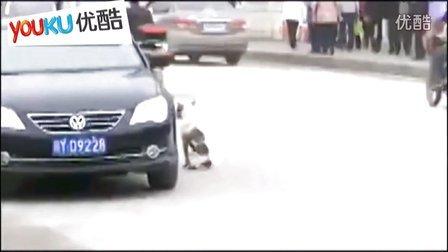 镇定的狗狗