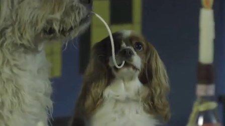 [搞笑宠物]迪士尼经典动画《小姐与流氓》真狗版
