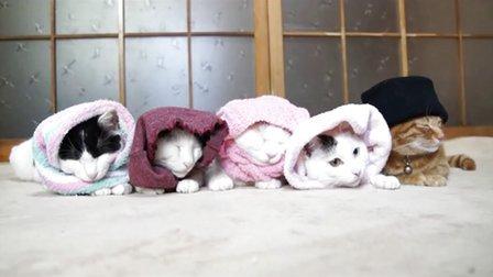 [搞笑宠物]5只戴帽子的喵星人