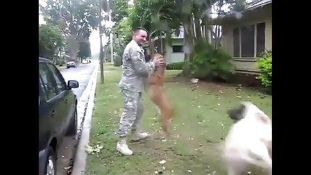 [搞笑动物]狗狗和大兵主人重聚感人场面