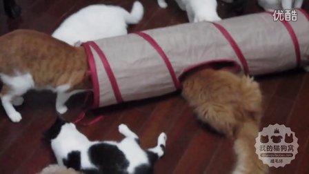 Smarty Kat猫隧道视频