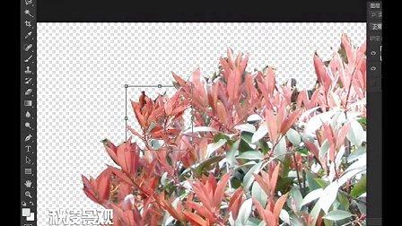 沁鑫-园林景观PS-真实树扣图和自然式花种植技巧-秋凌景观网