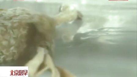"""国交演绎""""奥斯卡最佳动画短片——《彼得与狼》""""[您早]"""